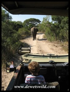 3 Years old: May 2013. Following an elephant at Tembe
