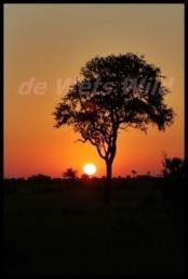 Satara sunset