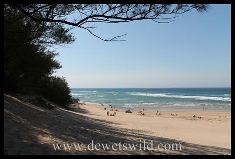 The beach at Cape Vidal