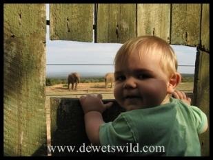Joubert watching elephant from Spekboom hide in Addo Elephant Park