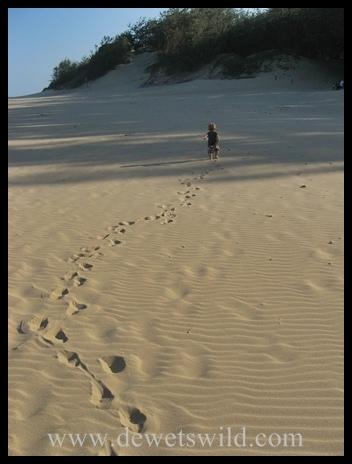 Joubert walking on the beach at Cape Vidal