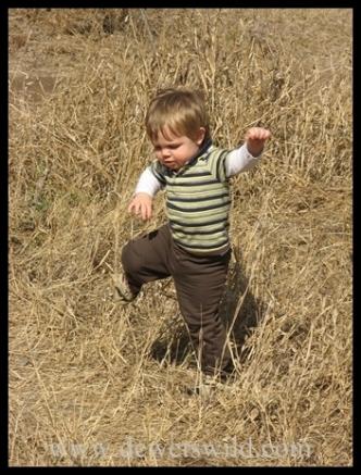 Joubert running through the veld at Mooiplaas Picnic Site in Kruger Park