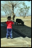 Joubert photographing a warthog in Mpila Camp in the Hluhluwe-Imfolozi Park