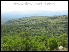 a View over the Ithala Game Reserve