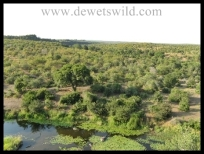 Nwanedzi viewpoint in the Kruger National Park