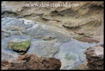 Intertidal pool - iSImangaliso Wetland Park
