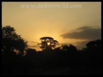 Sunset over the Kruger National Park (near Shimuwini Bushveld Camp)