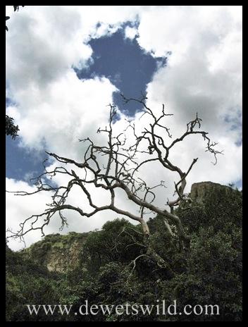 Africa (Ithala)
