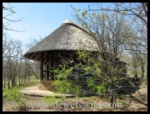 Mopani, Kruger Park, September 2012