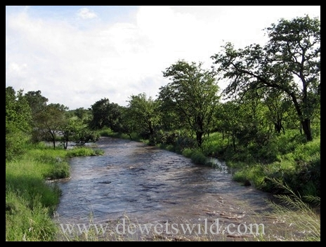 Stream in flood KNP3
