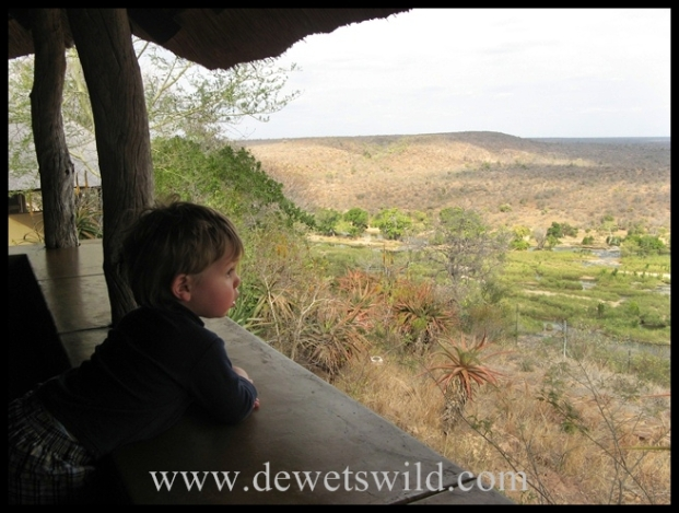 At home in the Kruger Park