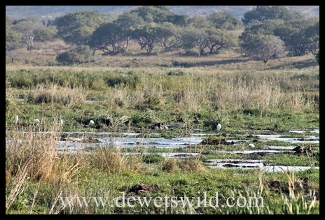 worldwetlandsday_7371