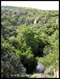 Wooded gorge