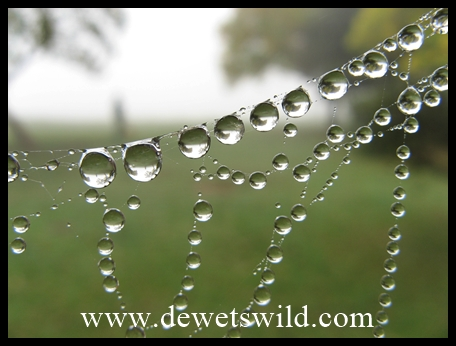 Dewdrops on spider's web