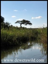 Stream crossing near Pretoriuskop