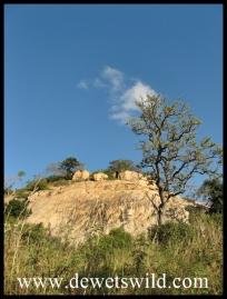 Rocky outcrops lending character to the landscape around Pretoriuskop