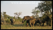 Elephants frequent the Biyamiti rivercourse