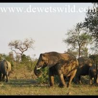 Elephants frequent the Biyamiti rivercourse
