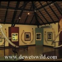 Letaba Elephant Hall