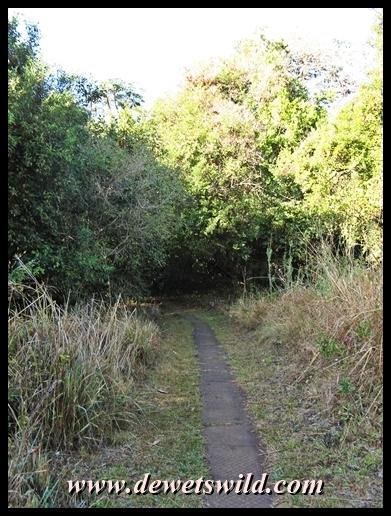 iDube Trail