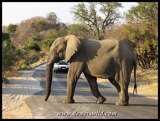 World Elephant Day 2013