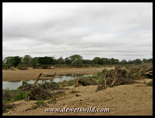 Debris, deep sand and newly formed pools of water along the course of the Shingwedzi River