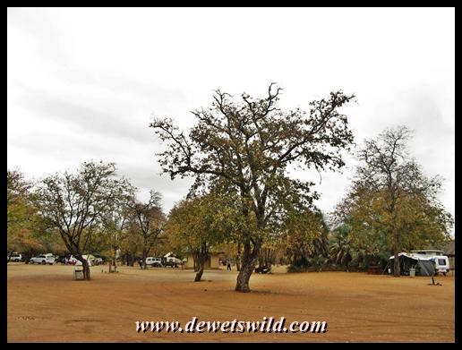 Shingwedzi camping site