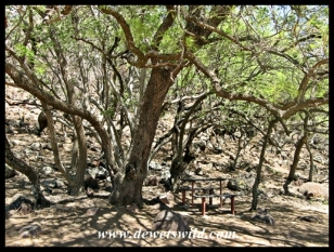 Shady picnic site
