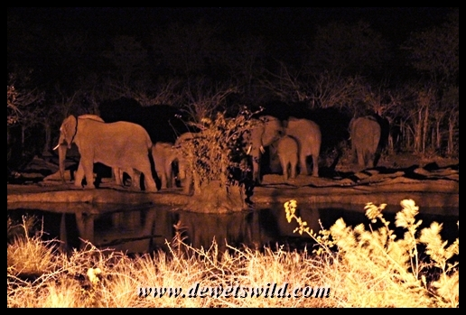 Elephant herd at Punda Maria's waterhole