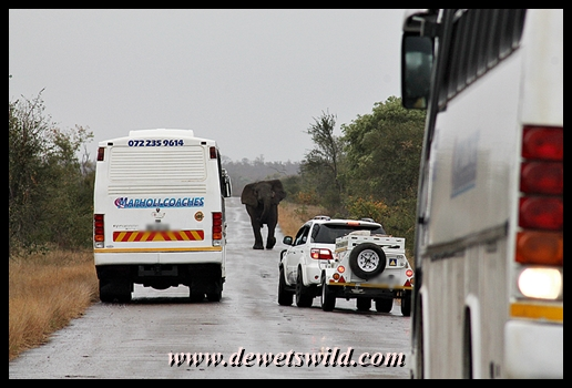 Elephant roadblock on the way to Shingwedzi