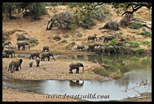 Elephant, Shingwedzi