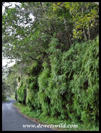 Road through the Oribi Gorge