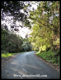 Road through the Oribi Gorge