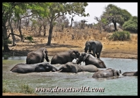 Elephant at Klopperfontein