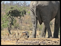 Big and small at the waterhole