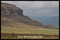 Blesbok and Golden Gate scenery