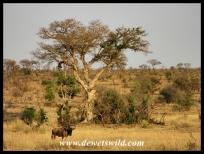 Nhlowa Road scenery