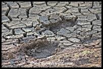Elephant tracks in the mud