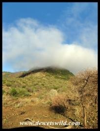 Pilanesberg scenery