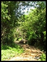 Ntshondwe pathway