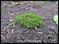 An easy-to-overlook patch of moss