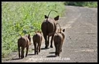 Warthog sounder