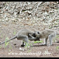 Monkey antics
