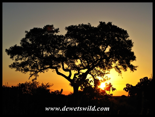 Letaba Sunset