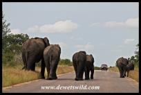 Neatly arranged elephants