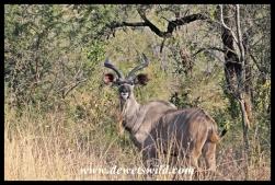 Kudu teenager