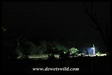 Orpen's waterhole is floodlit at night