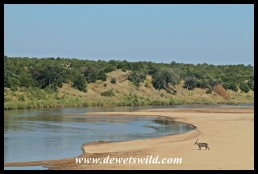 The wide, sandy Letaba riverbed