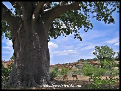 Mapungubwe National Park scenery