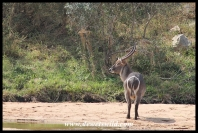 Wildlife encounter on the Rhino Trail